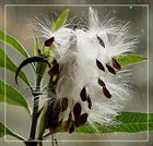 Pflanzenerotik