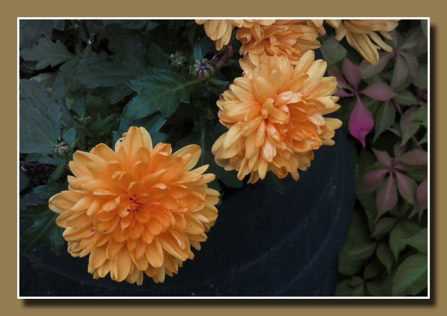 Pflanzenkübel - rechtzeitig zum kalendarischen Herbstbeginn,