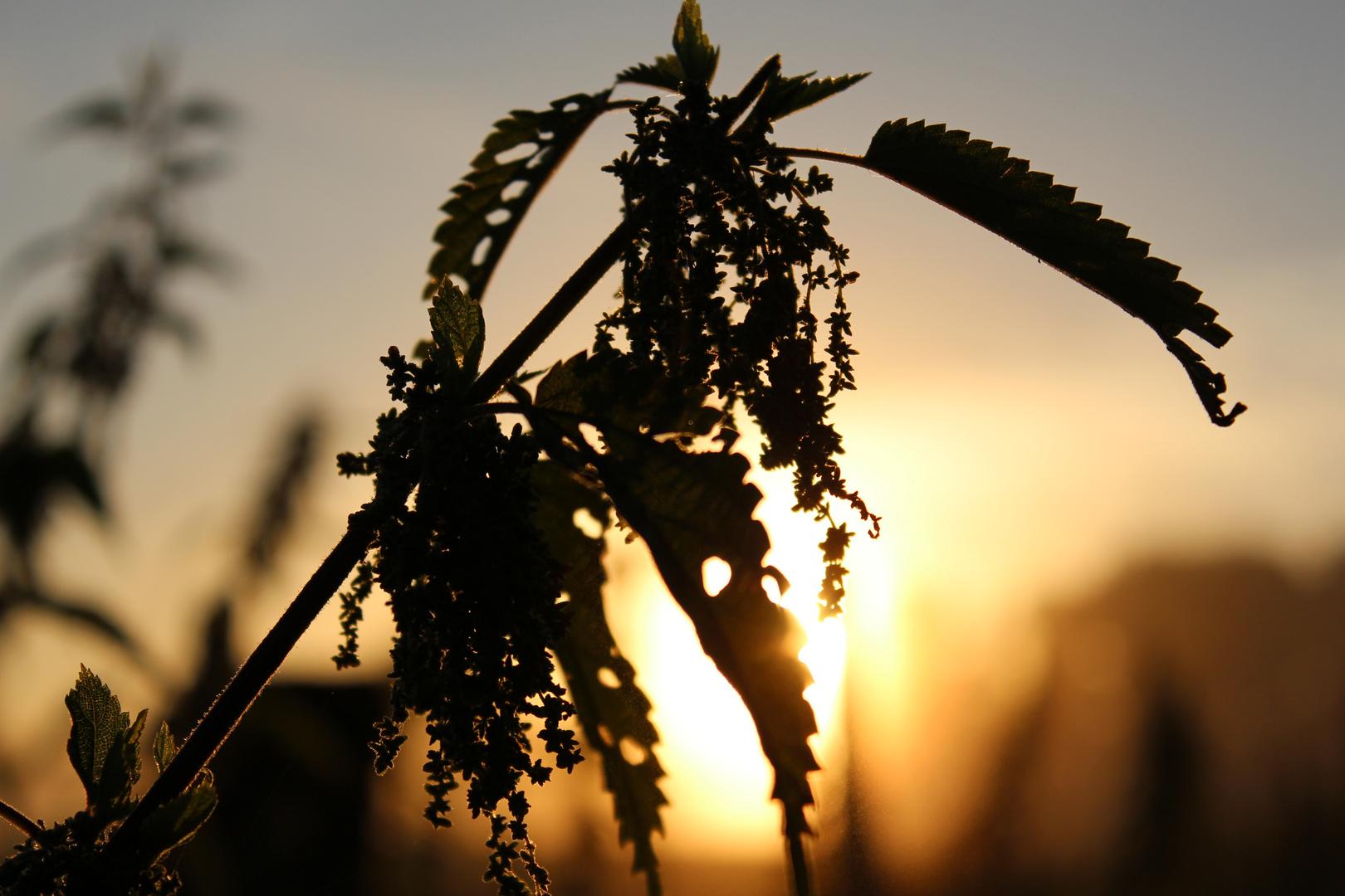 Pflanzenmorgen