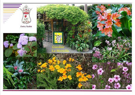Pflanzenpracht im Mortella Garten