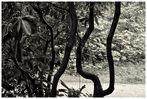 Pflanzen.Struktur. (1)