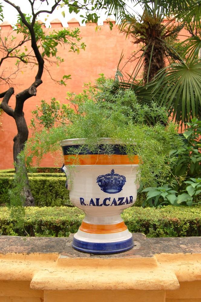 Pflanzentopf im Real Alcazar