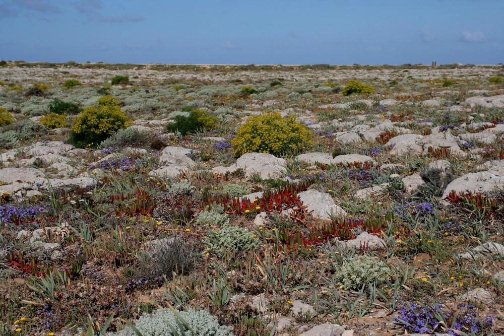 Pflanzenwelt der Algarve