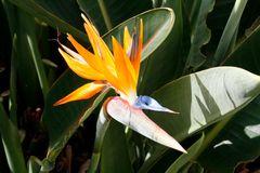 Pflanzenwelt Madeira I