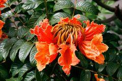 Pflanzenwelt Madeira IV