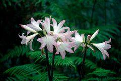 Pflanzenwelt Madeira V