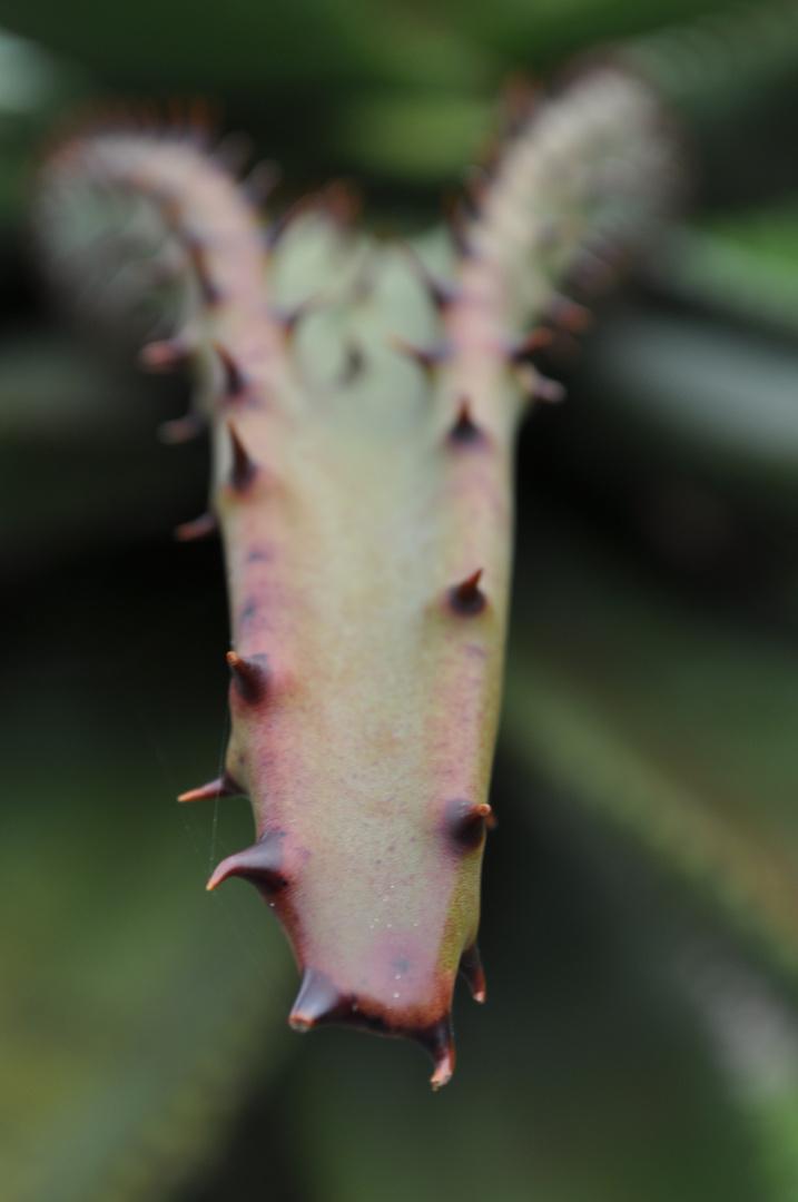 Pflanzenzunge