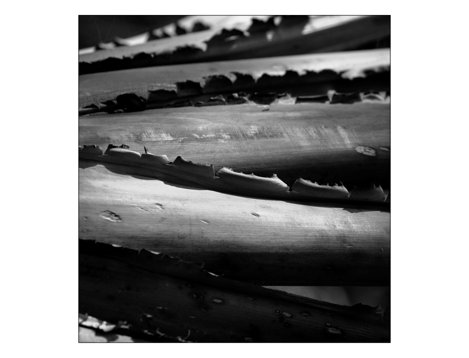 pflanzliche grautöne