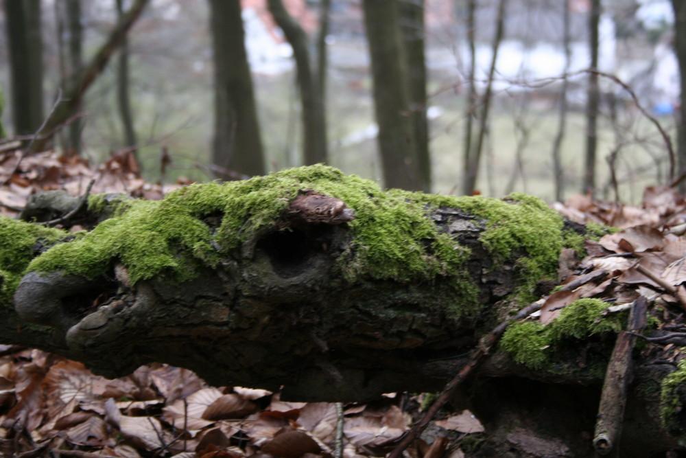 Pflanzlicher Tierkopf