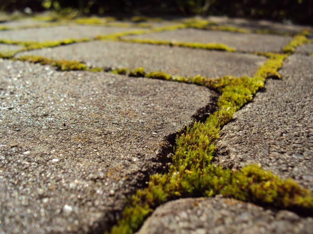 Pflastersteine mit moos foto bild pflanzen pilze for Moos bilder pflanzen