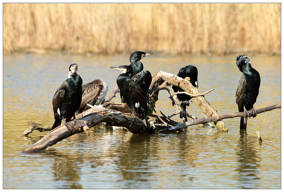 Pfögel im Zoo