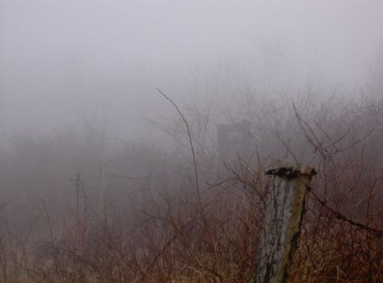 Pforte vom Heidesee im Nebel