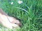 Pfote mit Gänseblümchen