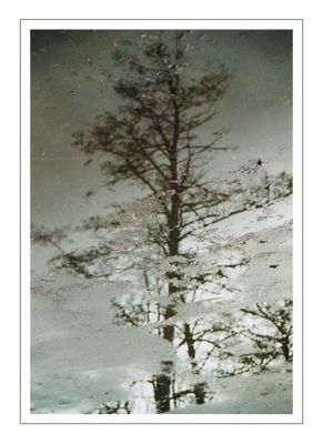 Pfütze mit Baum