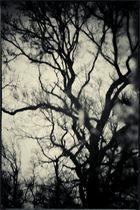Pfützen-Baum