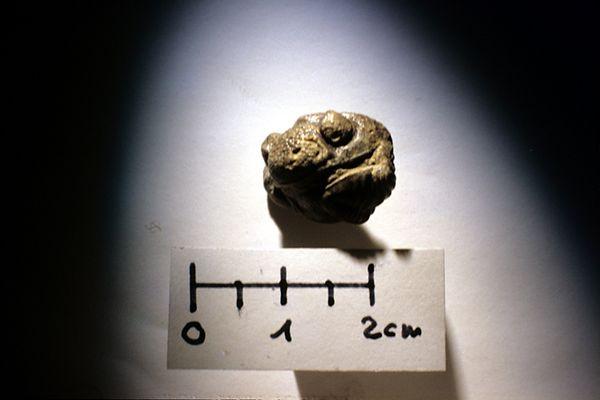 Phacops (Geesops) schlotheimi (BRONN)