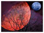 Phänomene der Nacht
