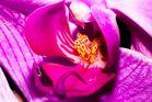 ...Phalaenopsisdetail...