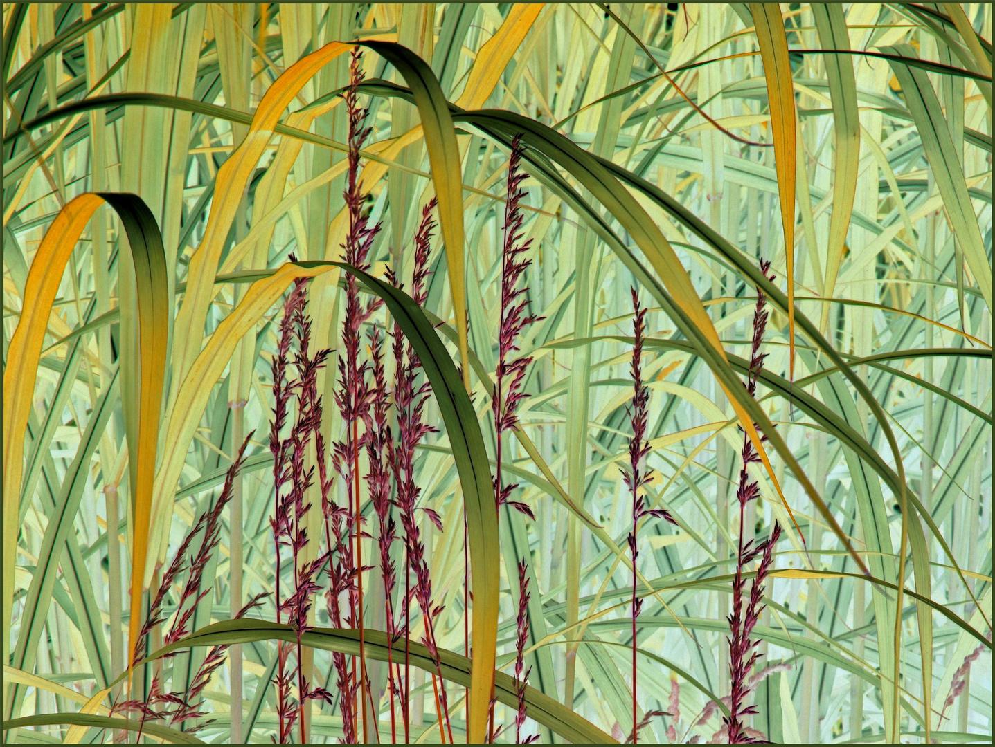 Phantastic Grass Yellow