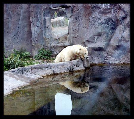Philosophischer Eisbär