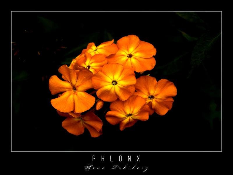 Phlonx