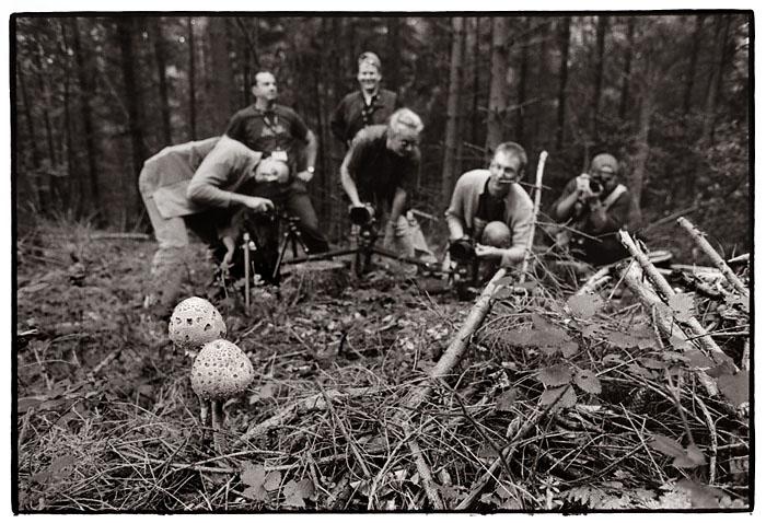 photo fungi