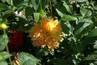 photo jardin3