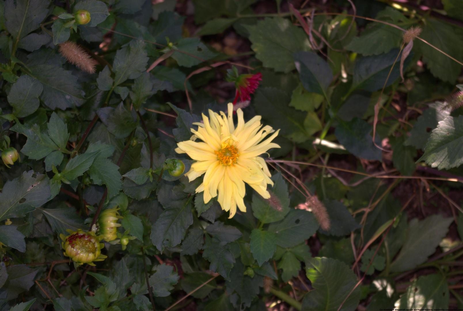 photo jardin6