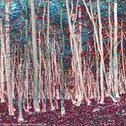 PhotoART: walking trees