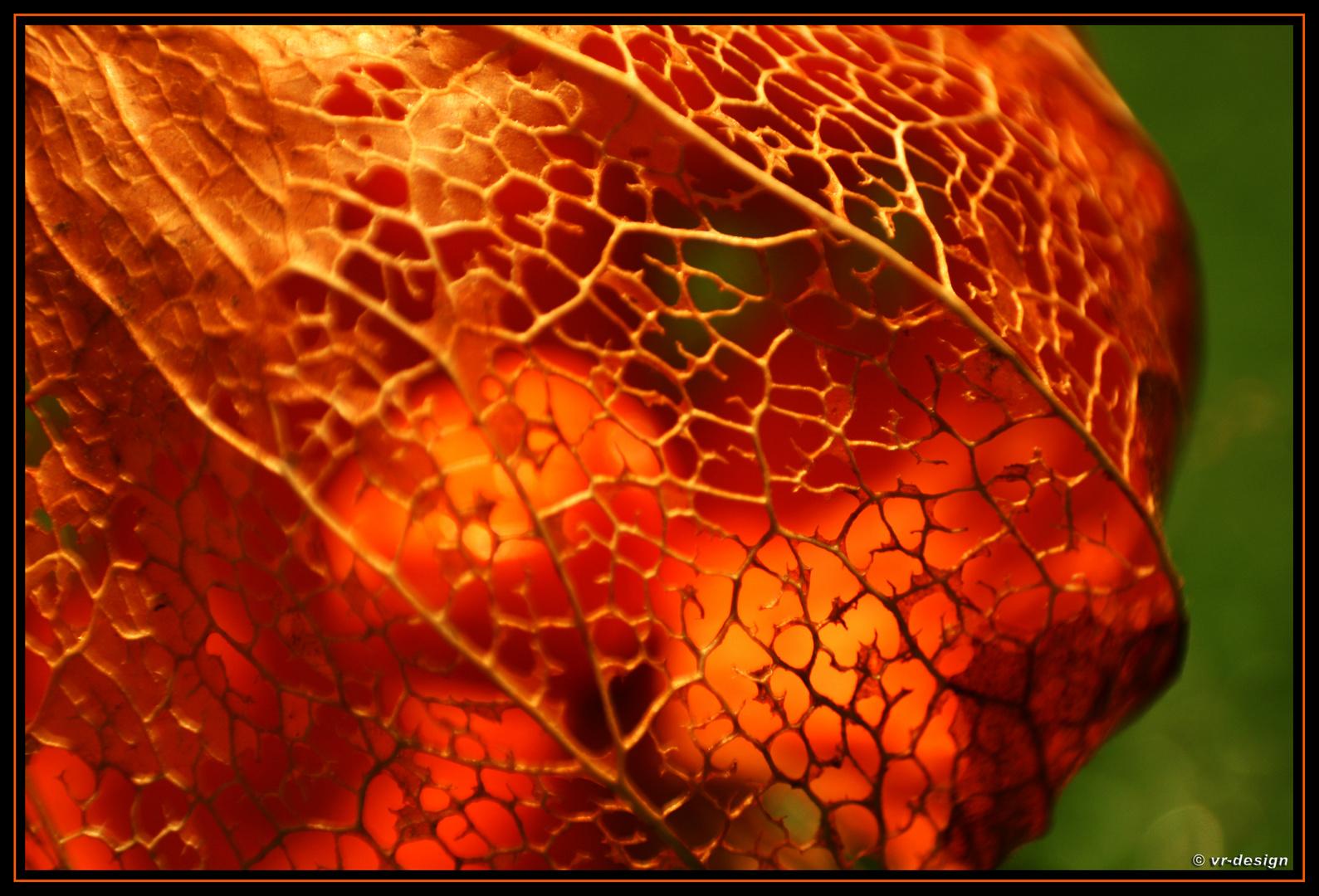 Physalis im Herbst !