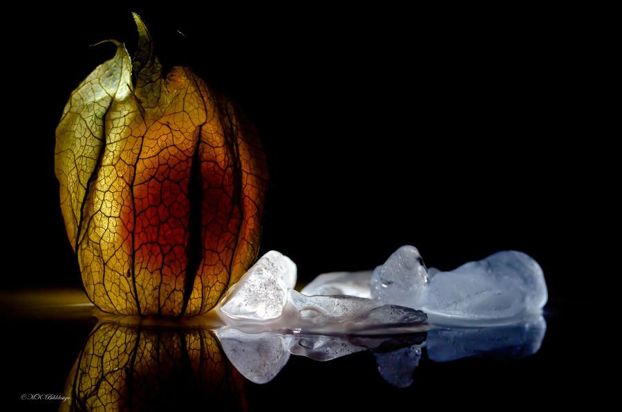 Physalis on Ice