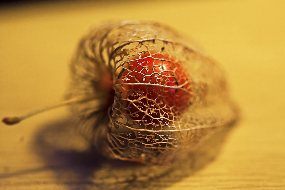 Physalis trägt Herbst