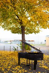 Piano im Herbst