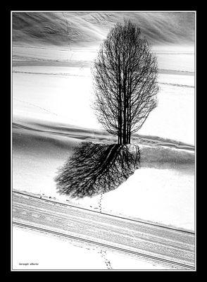 pianta solitaria