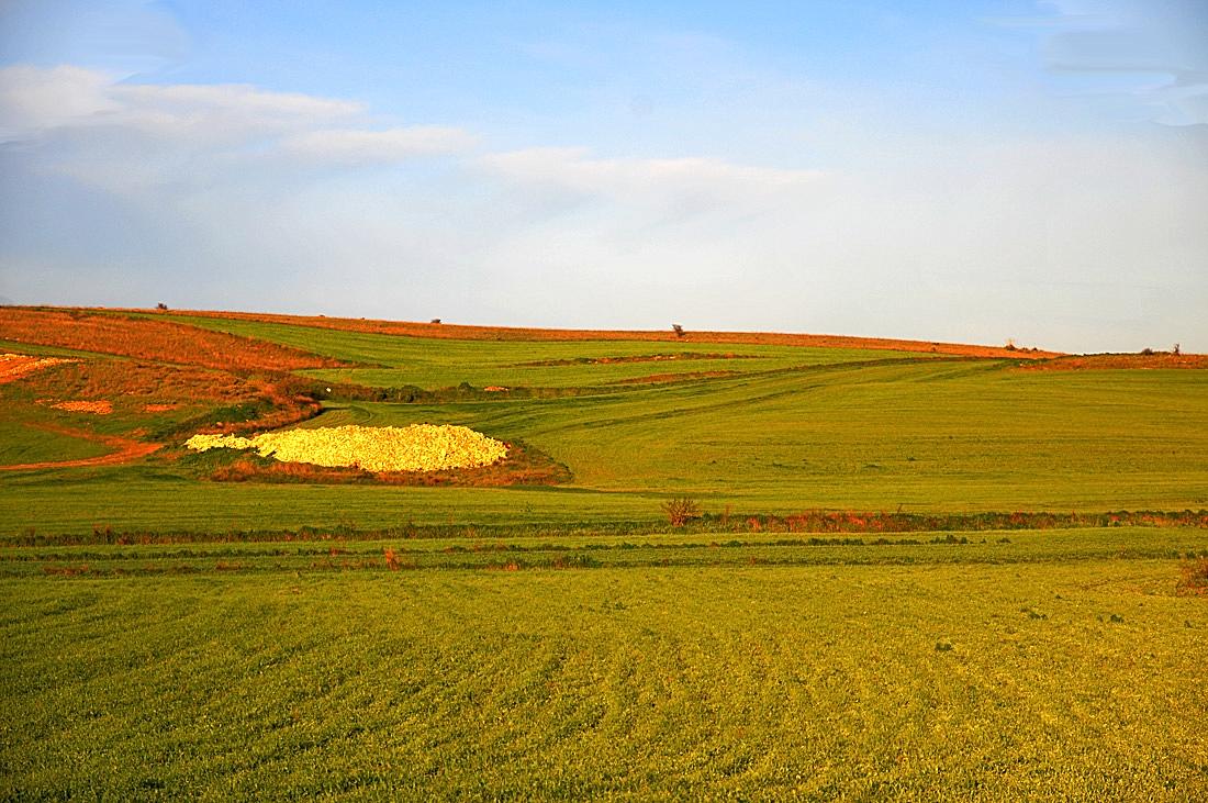 Pianure medio campidano foto immagini paesaggi for Piani di campagna in collina