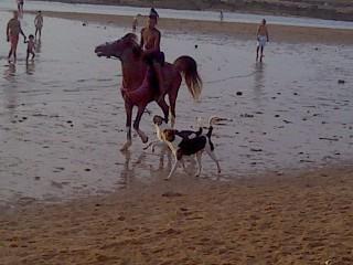 Pic_0716_020 le chevalier et les chiens