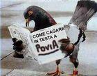piccione maledetto