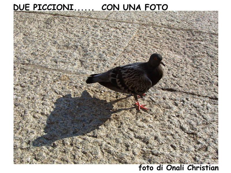 piccione-ombra