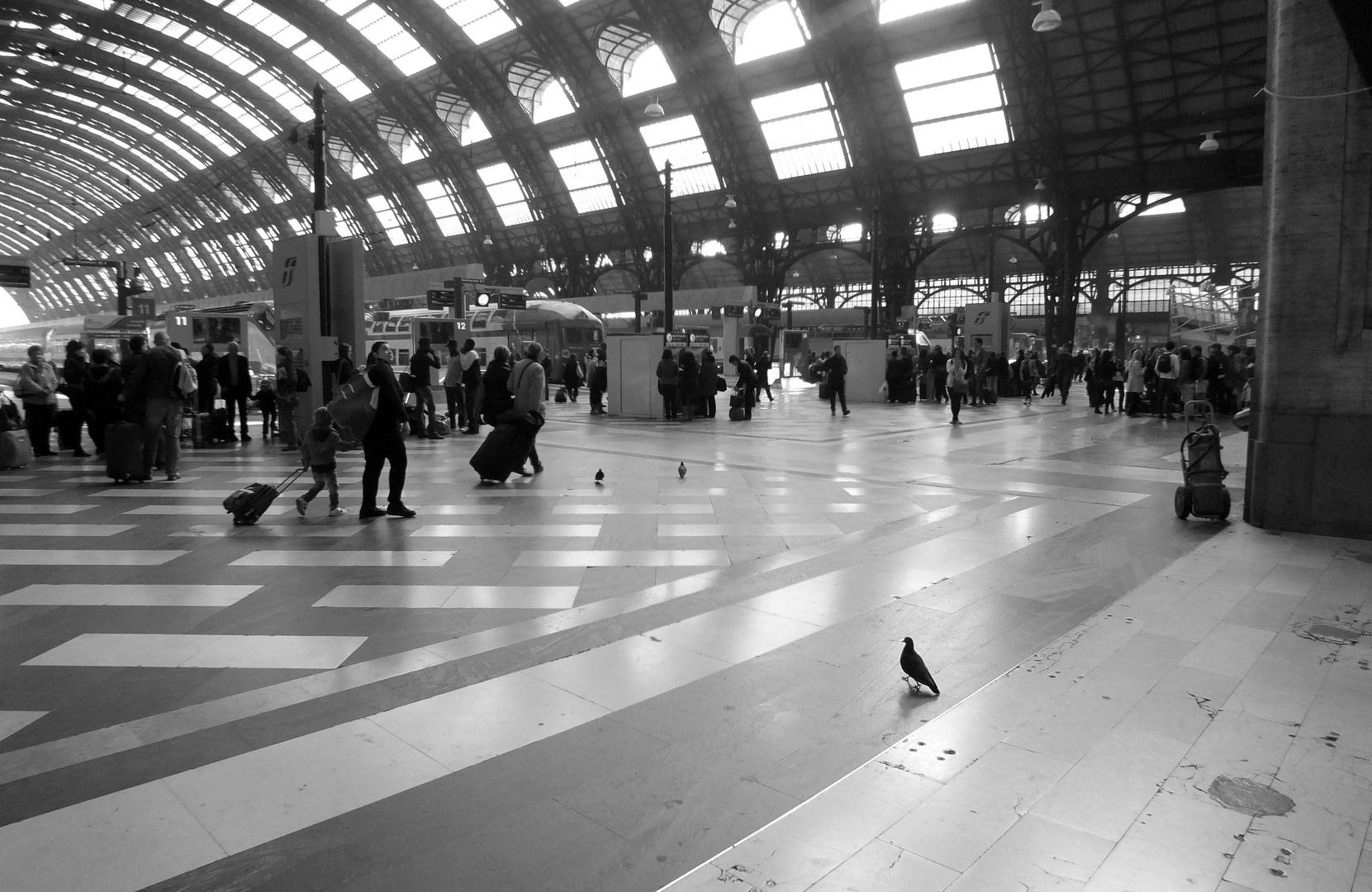 Piccione Viaggiatore - Omaggio al mio maestro Renzo Baggiani