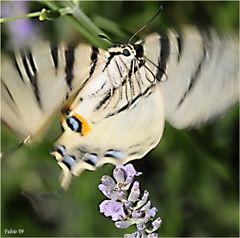 piccoli battiti d'ali