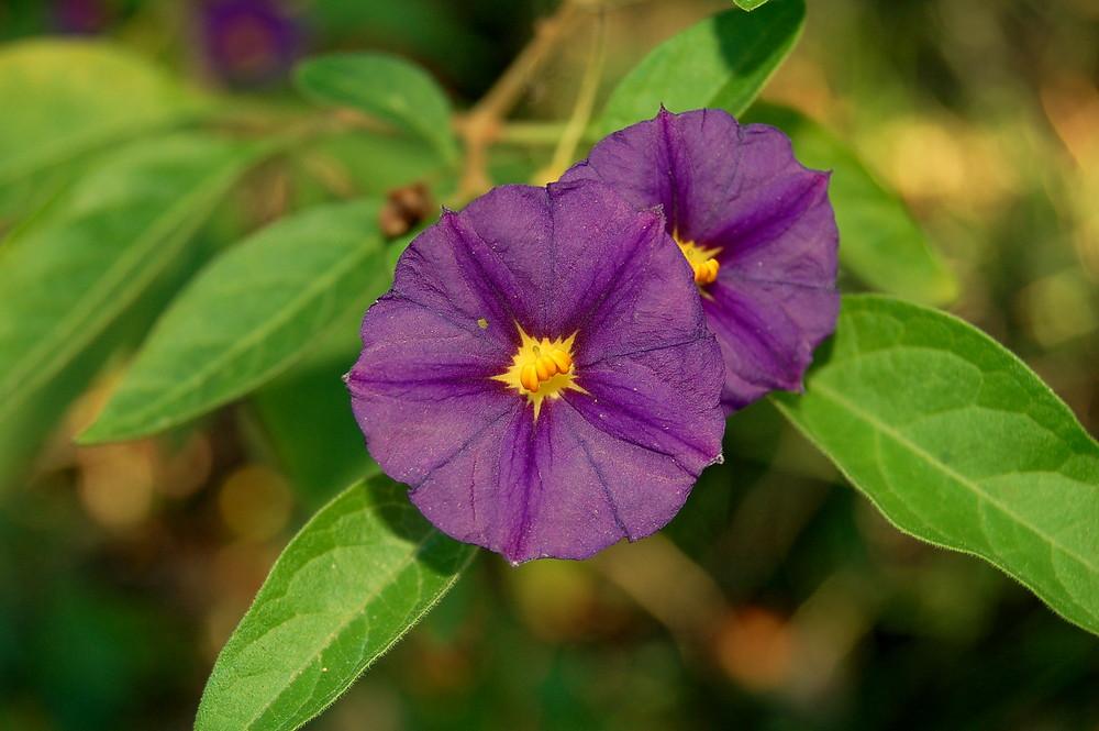piccolo fiore