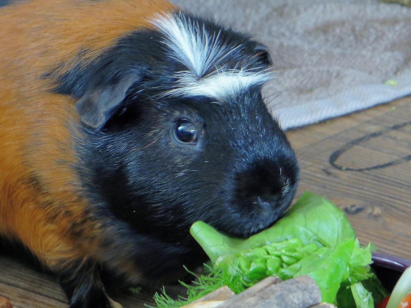 Piccolo hat die Schnauze voll ! :-) Mahlzeit !