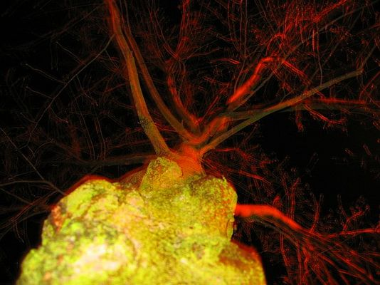 pickelbaum