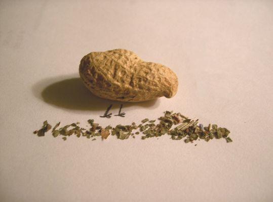 pickende Erdnuß