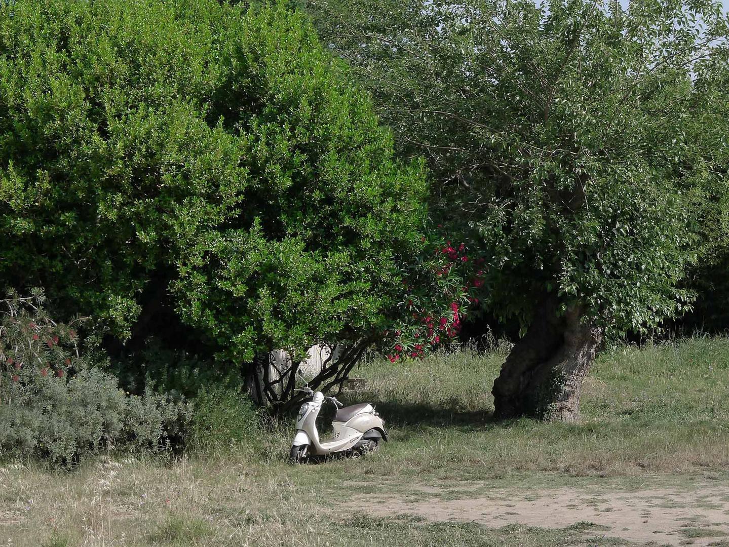 Picknick in der provence am Waldesrand