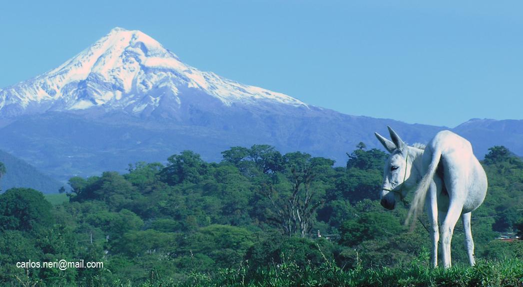 Pico de Orizaba, acompañado de Platero