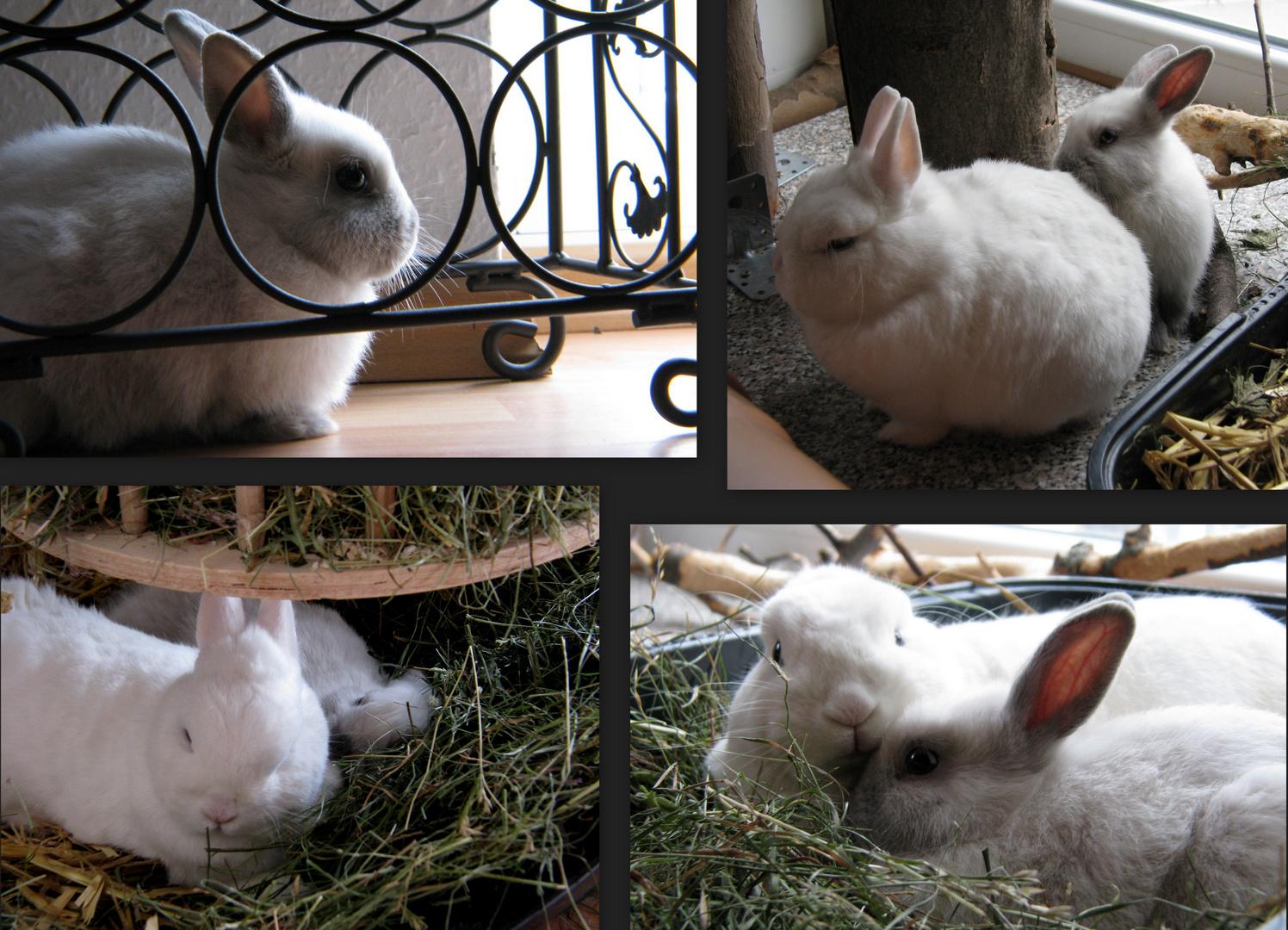 Pico unser Tierheim Kaninchen