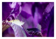 Picture Perfect Purple Planet