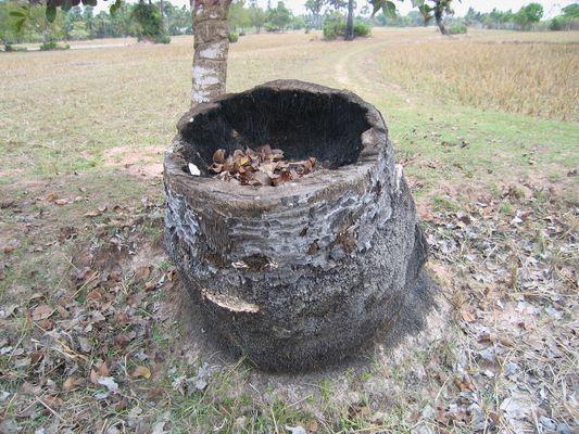 Pied de l'arbre utilisable!