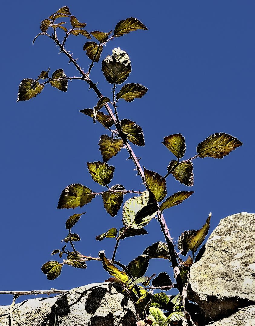 Piedra con planta